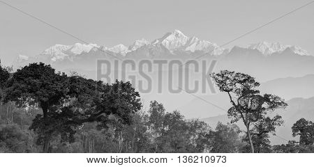 Beautiful panoramic view of tress of Silerygaon Village with Kanchenjunga mountain range at the background moring light at Sikkim India. Black and white panorama stock image.