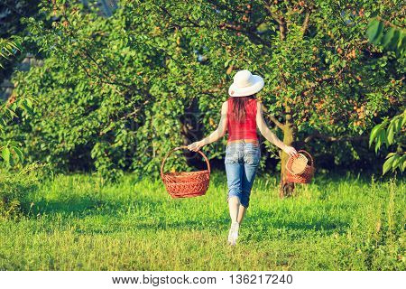 Beautiful young woman picking ripe fruit in wooden crate in orchard or on farm on a fall day