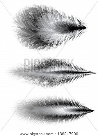 Set of different feathers of birds. Vector illustration