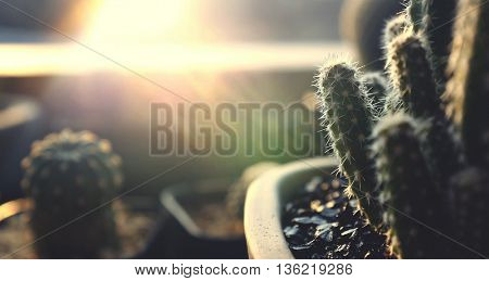 Cactus Growing Botany Nature Environmental Thorn Concept