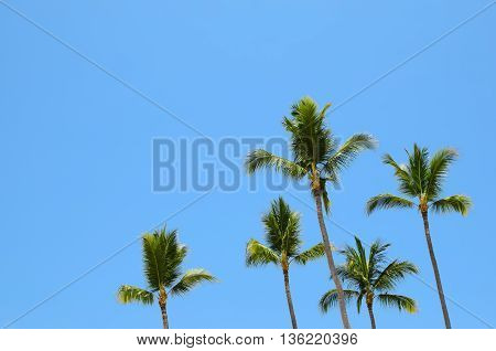 Green palm trees against blue sky - tropical paradise