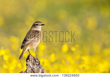 Beautiful wild bird perched on a branch in nature