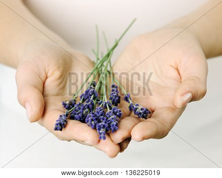 female hands with lavender