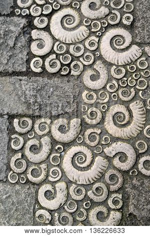 Detail of fossils in Lyme Regis Dorset
