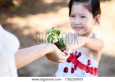 Child Giving Plant Seedling