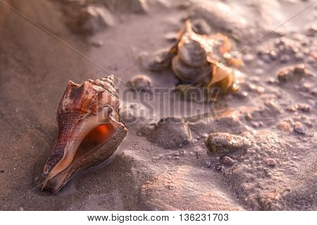 shell on the beach in low tide
