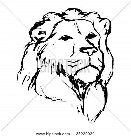 Graphic image of a lion. Lion head on white background abstract drawing. Lion with mane vector