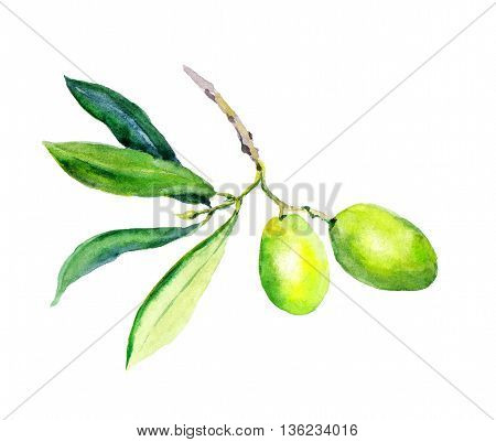 Olive branch with green olives vegetables and leaves. Watercolor