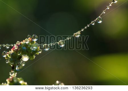 Dew drops closeup on spider web with Sun beams
