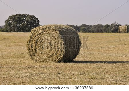 A rolled hay bail sitting in a field.