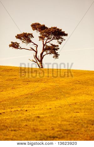 Lonely tree in the meddle of a meadow