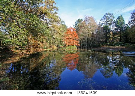 Trees reflected in a lake in Autumn