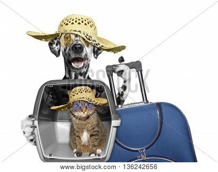 dog and cat in transportation box are going to travel -- isolated on white
