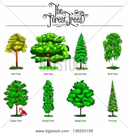 Summer Green Forest Tree isolated on white background. Cartoon vector set trees in outdoor park. Outdoor trees in the park with branch, foliagles and leafs. Wild trees in forest, plants and animals.
