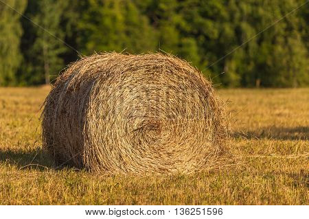 Rolls of haystacks on the field. Summer farm scenery with haystack on the Background of beautiful sunset. Agriculture Concept.