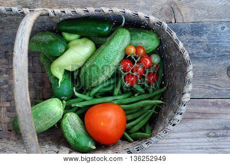 Garden vegetables freshly picked in the summer
