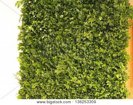 Live Wall Made From Plants and Leaves