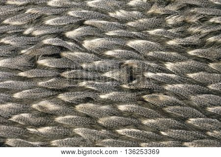 Fashion Animal Print Feather Material Texture Background