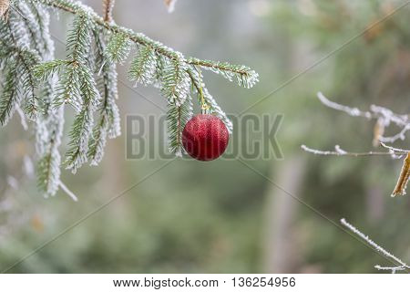 Red christmas ball on a tree branch with winter frost.