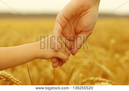 Hands of father and daughter on wheat