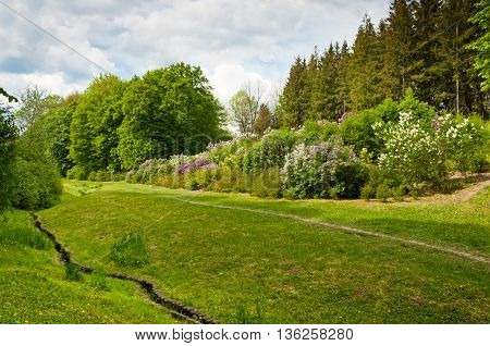 The beautiful landscaping with beautiful plants in spring