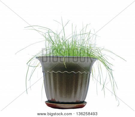 grass in brown flowerpot isolated on white
