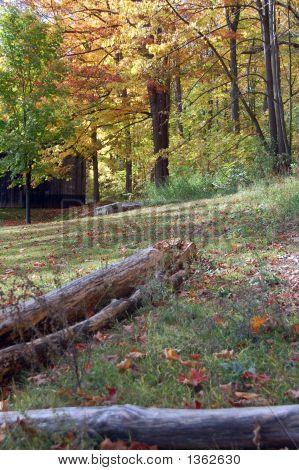 Autumn Scene 8