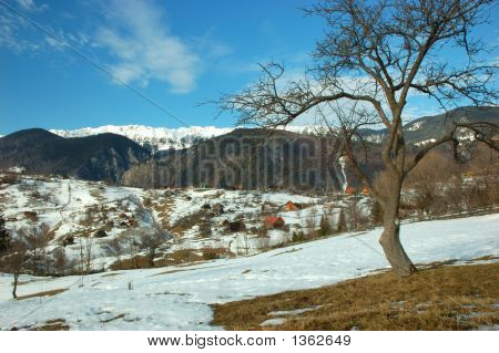 Mountains And Tree