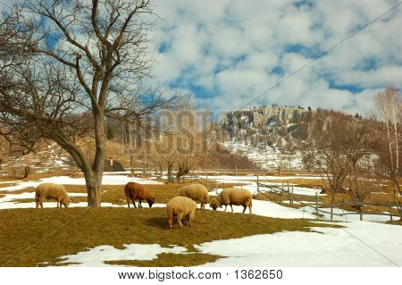 Sheeps And Hills