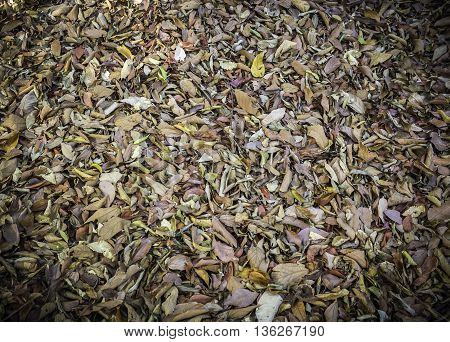 Closeup pattern and texture of dry leaves