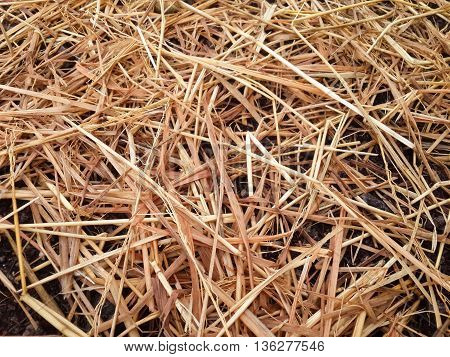 close up dry straw texture on the ground