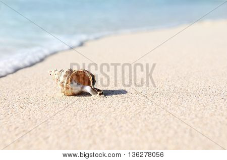 sea shells with sand and ocean as background