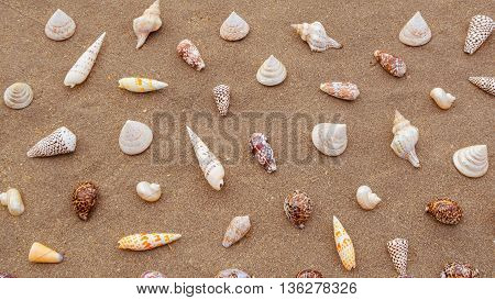 A variety of sea shells arrranged on the sand.