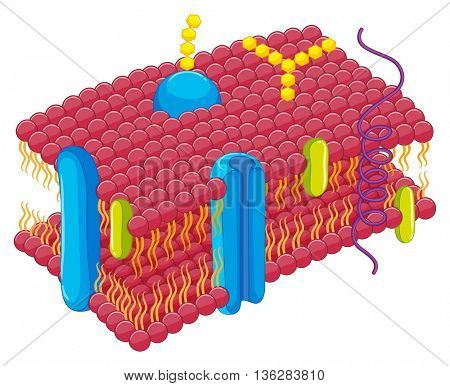 Cell membrane in closer look illustration
