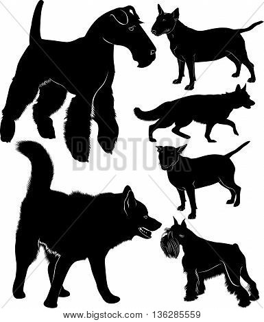dog collection shepherd dog bullterrier laika fox terrier Miniature Schnauzer. dogs vector black silhouettes isolated on a black background