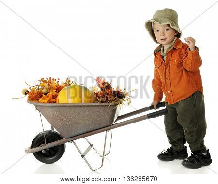 An adorable preschooler dressed in autumn colors pushing a wheelbarrow full of fall foliage and a pumpkin.  On a white background.