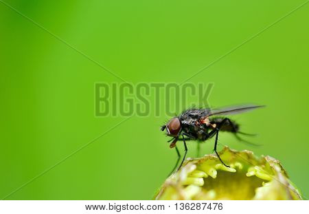 Fly On Plant