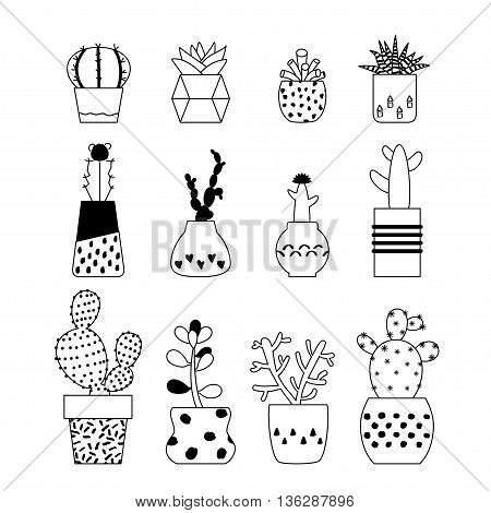 Set of vector illustration succulent plants cactus in cute retro pots. Collection of house plants from cactus with flowers. Cacti succulent on white background. Isolated line art outline vector