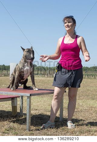 woman training her bull terrier in agility