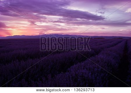 Lavender fields. Beautiful image of lavender field. Summer sunset landscape contrasting colors. Dark clouds dramatic sunset