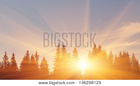 Clouds and fog over pine tree forest