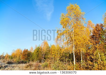 Colorful Autumn Forest On A Background Of Blue Sky