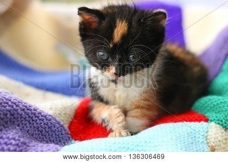 A tortoiseshell kitten lying on a patchwork blanket