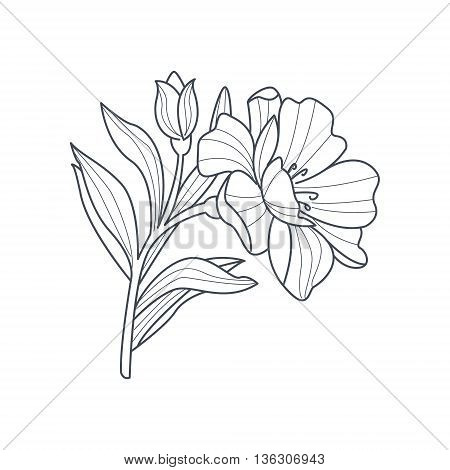 Calendula Flower Monochrome Drawing For Coloring Book Hand Drawn Vector Simple Style Illustration