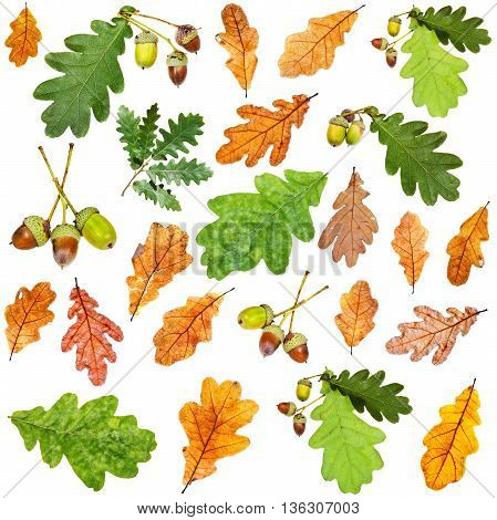 Set Of Summer Green And Autumn Brown Oak Leaves