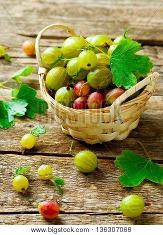 ripe fresh organic gooseberries in a basket on a wooden table. style rustic. selective focus