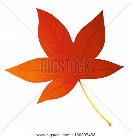 Red maple leaf vector illustration, illustration with beautiful autumn maple leaf isolated on white background
