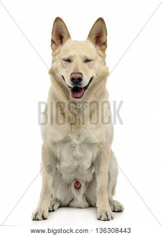 Smiley Dog Sitting In White Backgroud Studio