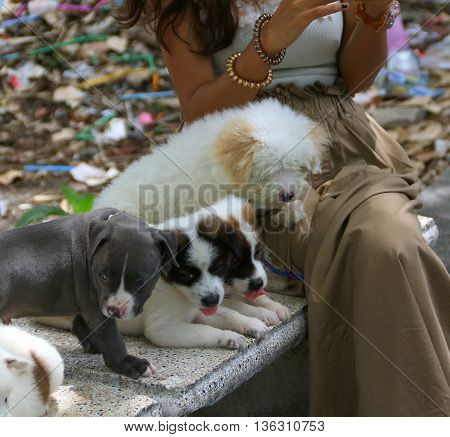 girl sitting on bench with row of puppies, Songkhla, Thailand