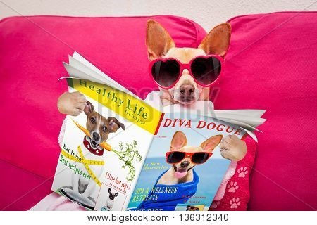 Dog Spa Wellness Reading Magazine